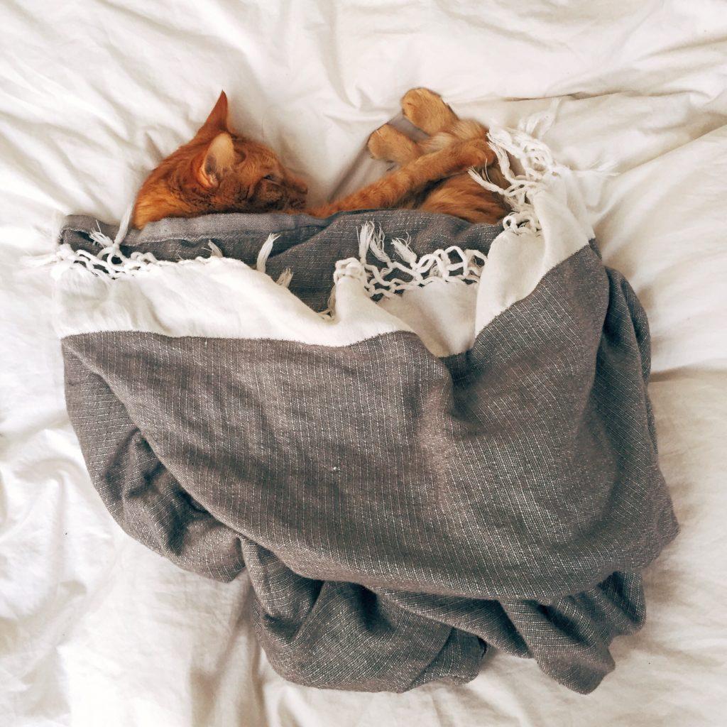 plais cozy gris chat
